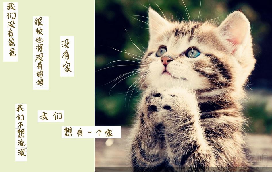 自贡猫网流浪猫爱护动物协会