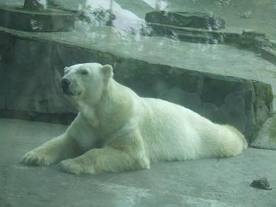 4月5日重庆野生动物园游记图